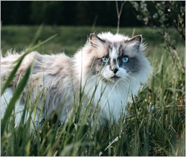 MiniFinder GPS Tracker Cat